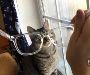 Z moim kotem chyba jest coś nie tak