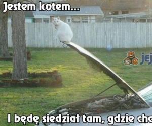 Jestem kotem...
