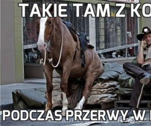 Takie tam z koniem