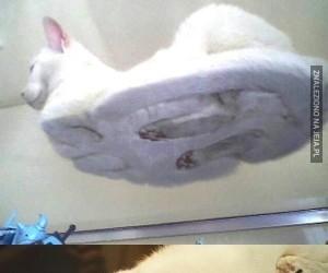 Śmieszne zdjęcia kotów spod szkła
