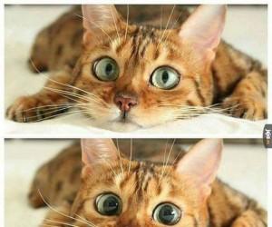 Tryb kota - włączony