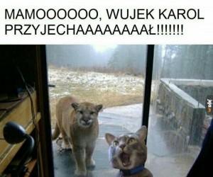 Mamooooo!