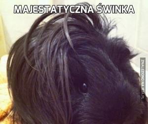 Majestatyczna świnka