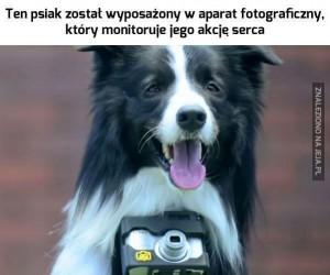 Teraz już wiesz, co kręci twojego psa