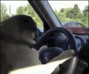 Nie mam pojęcia gdzie jadę