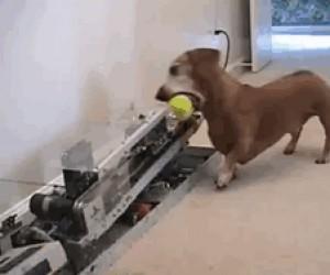 Jak zabawić psa