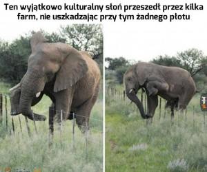 Kulturalny słoń