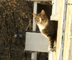 Hardkorowy kot