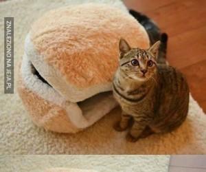 Ulubiona kocia kanapka