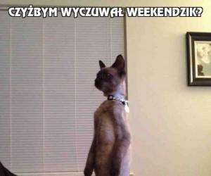 Czyżbym wyczuwał weekendzik?