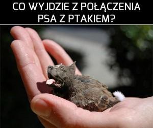 Co wyjdzie z połączenia psa z ptakiem? cz.2