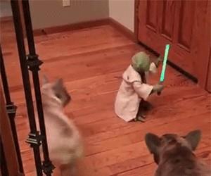 Yoda walczy z psami