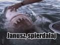 Rekin Janusz - wtf