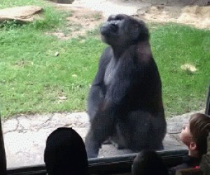 Cwaniaki w Zoo