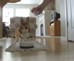 Jeść, jeść, jeść!