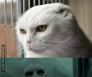 Kot Voldemorta odnaleziony!