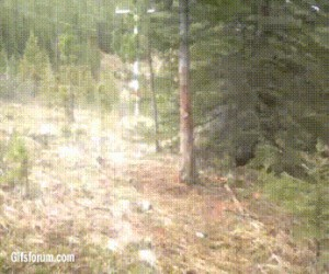 I nagle... Niedźwiedzie!