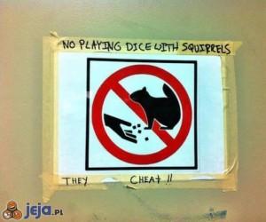 Nie grać w kości z wiewiórkami