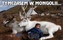 Tymczasem w Mongolii...