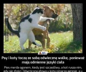 Psy i koty toczą ze sobą odwieczną walkę, ponieważ mają odmienne języki ciała