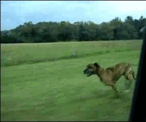 O psie, który skakał z pociągu