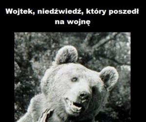 Niedźwiedź, który poszedł na wojnę