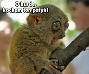 O kurde...