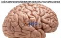 Mózg jest najważniejszym organem w naszym ciele