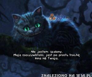 Kotek nie jest szalony...