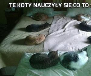 Te koty nauczyły się co to symetria
