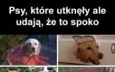 Psy takie są