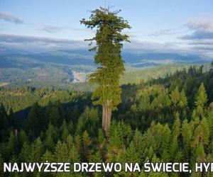 Najwyższe drzewo na świecie, Hyperion