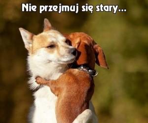 Gdy psy się przytulają...