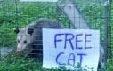 Kot do wzięcia za darmo
