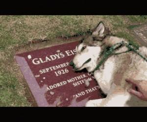 Pies zabrany na grób właściciela