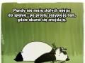 To, czego nie wiesz o zwierzętach...