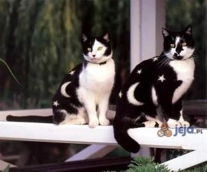 Koty po Photoshopie