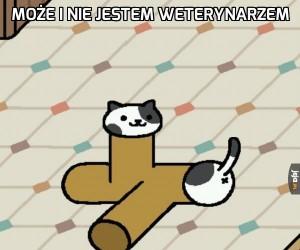 Połamany kotek