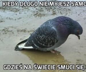 Gołębia depresja