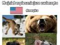 Najniebezpieczniejsze zwierzęta