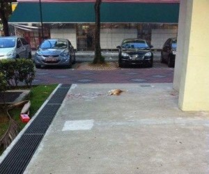 Biedny kotek...
