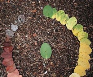 Cykl życia liścia