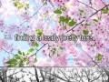 Tak, to naprawdę piękne drzewo
