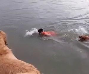 Takie tam, pływanie z psiakami