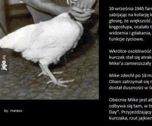 Kurczak Mike