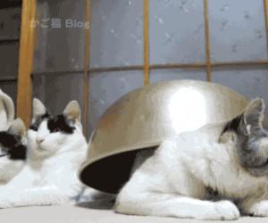 Szybko, do bunkra!