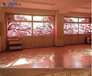 Ładne drzewa za oknem?