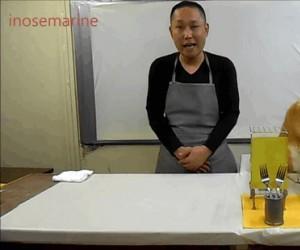 Gotowanie z piesełem
