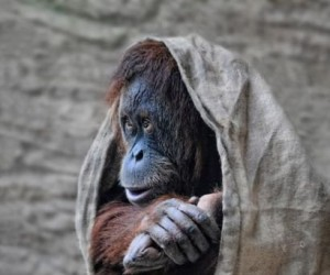 Zmarznięta małpka
