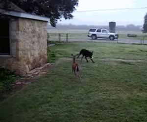 Psiak ma nowego kumpla